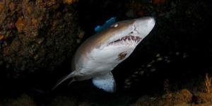 Diving Aliwal Shoal Durban
