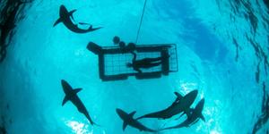 Shark Cage Diving Umkomaas Durban